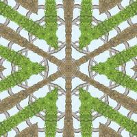 Bark Leaves Stone Kaleidoscope Art 1