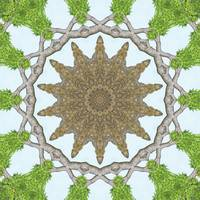 Bark Leaves Stone Kaleidoscope Art 2