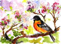 Baltimore Oriole Watercolor & Ink by Ginette Calla