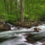 """Little Pigeon River in May Great Smoky Mountain NP"" by jimcrotty"