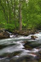 Little Pigeon River in May Great Smoky Mountain NP