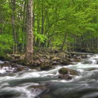 Little Pigeon River in May Great Smoky Mountain NP by Jim Crotty