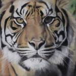 """eye of tiger"" by giftportraits"