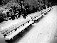 .snow.benches.