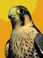 AGAINST A PAINTED SKY