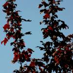 """""""red leaves in the sun"""" by jammingene"""