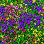 """Purple Pink Yellow Flowers Bright Colors"" by brianyoung81"