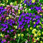 """Multiple Color Flowers Rich Colors"" by brianyoung81"