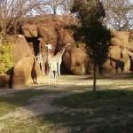 """""""giraffe zoo"""" by shinyshawenriquez"""