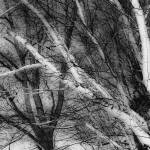 """Birch Branches, HLG, Tipton, Michigan"" by ZeipekisPhotography"