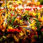 """street garden"" by drewcowan"