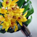 """CYMBIDIUM ORCHID"" by christopherbacon"
