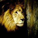 """""""lion"""" by lilygraceonline"""