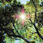 """""""Sun Jewel"""" by argosphotos"""