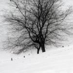 """""""Imagekind"""" by digidreamgrafix"""