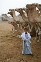 Young Camel Trader