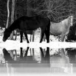 """Wild Horses"" by hopecreek"