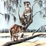 """""""Bob Cat Bayou"""" by AnimalsbyDiDi"""