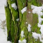 """Snow and Moss"" by lisette-vennstrom"
