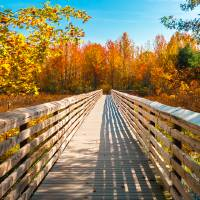 Fall Walkway Art Prints & Posters by Anthony L. Sacco