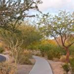 """Desert Trail"" by KimberlyKillebrew"
