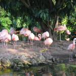 """Pink Flamingoes"" by perspectives"