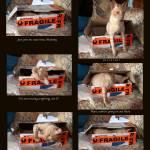 """Master Yoda montage"" by PhotographybyOdille"