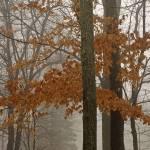"""""""Orange Leaves in Winter"""" by kimmanleyort"""