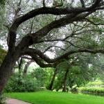 """Sawgrass Tree"" by CricketNoel"