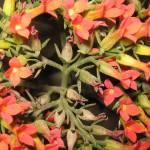 """Flowers"" by kingshook"