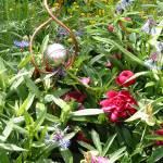"""Gazing Ball Sprinkler in Garden"" by MorningStarPhotos"