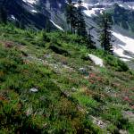 """Ridge Above Bagley Lakes at Mount Baker"" by ketchemr"