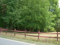 FENCES-DOGS-COOL PIX 060