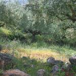 """Wild Olive Grove"" by fizzyimages"