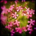 """Flowers ""Textured"""" by carlosRestrepo"