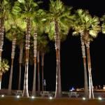 """""""Illuminated Palms"""" by jlmphotography"""