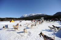 winter landscape husky sled dogs