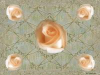 Penny Postcard Roses