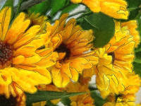 Yellow Chrysanthemums 1
