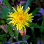 """""""The only thing that grows in my garden is weeds!"""" by ChrisCrowley"""