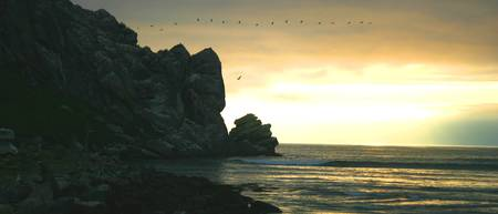 Birds over Morro Rock