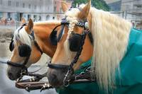 Fiaker horses Salzburg Austria - The Sound of Musi