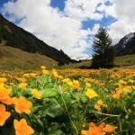 """Spring Landscape Sölkpass Austria © Bernhard Egger"" by eu-moto"