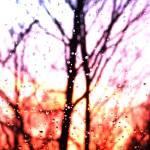 """Raindrop Sunset"" by foxvox"