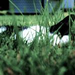 """Cats In the Grass: Keeping Cool"" by jasonmezera"
