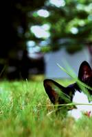 Cats In the Grass: Anthony Peeking