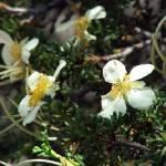 """""""wildflower 2"""" by kaberlin59"""