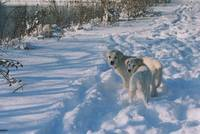 Branson and Natali in the Snow