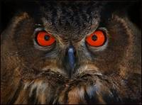 Owl Be Watchin You!