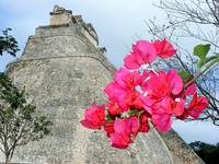 Flowers at Uxmal